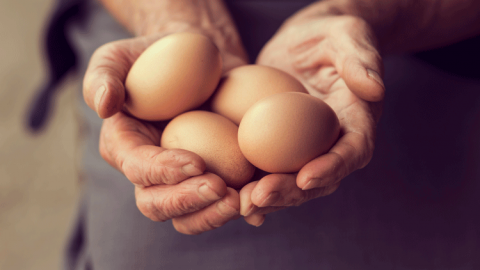 Restaurants urged to check their eggs as Fipronil scandal worsens