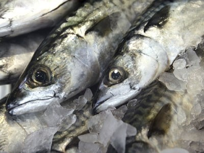 Marine conservation society puts line caught mackerel back for List of fish to eat